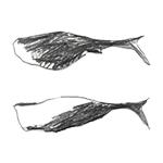 circulo-calhaubranco